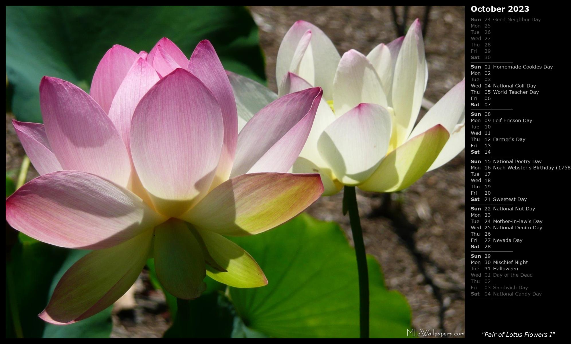 Mlewallpapers Com Pair Of Lotus Flowers I Calendar Images, Photos, Reviews