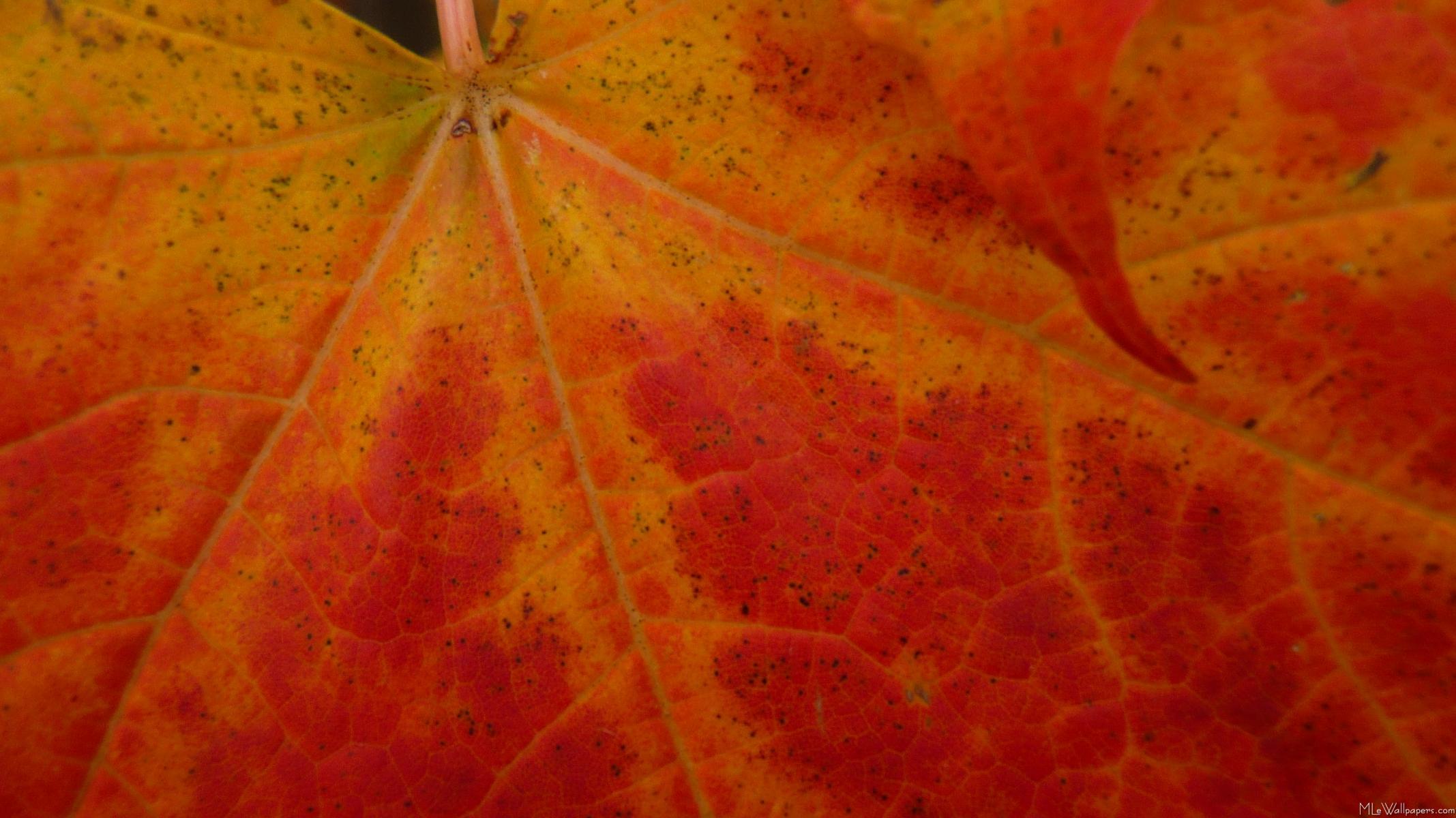 Autumn Leaves HD Wallpapers New Tab Theme Impressive